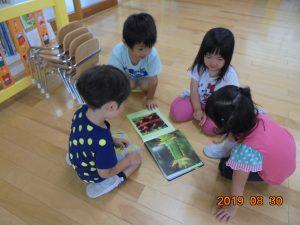 幼稚園で育てているあおむしを観察した後、絵本を開いて同じ種類のあおむしを探しています。